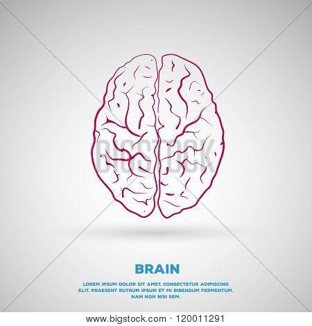Human brain line art illustration.