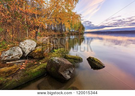 golden birches with stones, trees reflections in water, russian nature