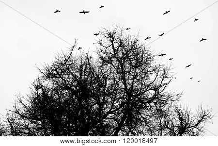 a flock of crows flying over the park