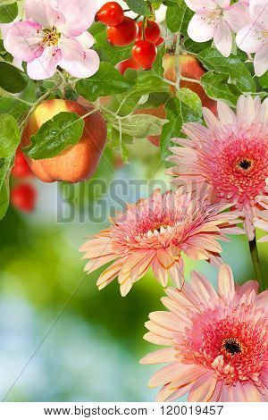 Image Of Flowers And Fruits In The Garden Closeup