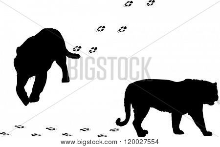 illustration with tiger silhouettes and tracks isolated on white background
