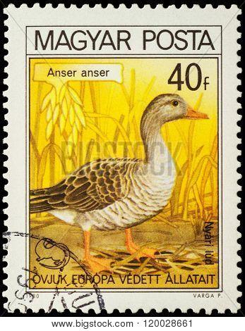 Greylag Goose (anser Anser) On Postage Stamp