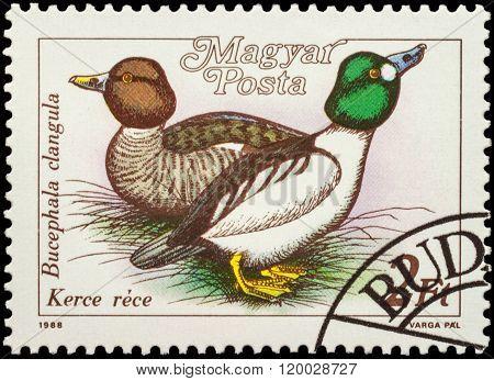 Eurasian Teal (anas Crecca) On Postage Stamp