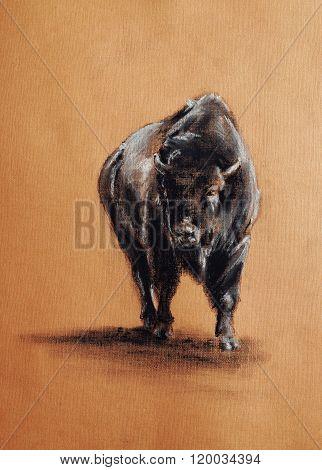 Bison Pastel Drawing