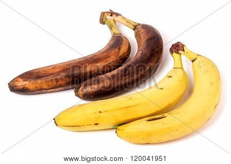 rotten and ripe bananas isolated on white background