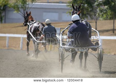 Horse Pacing