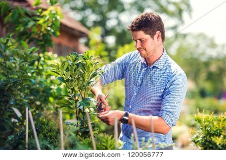 Handsome gardener pruning little tree, green sunny nature