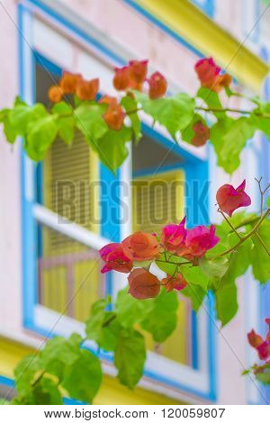 Colored Flowers In Front Ot Windows House