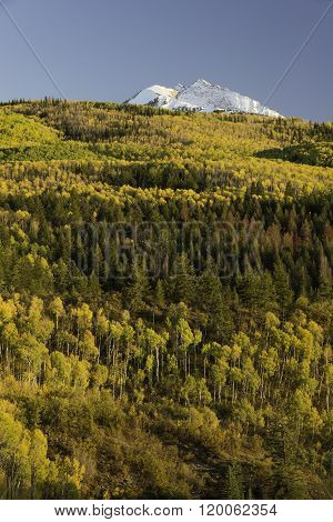 Changing Aspen and Chair Mountain