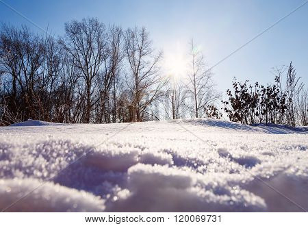 view from below the sun is shining through the trees and snow snowdrift