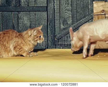 Cat And Piglet