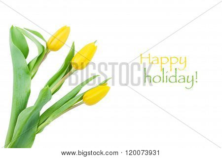 Yellow tulips with water droplets on a white background with sample text
