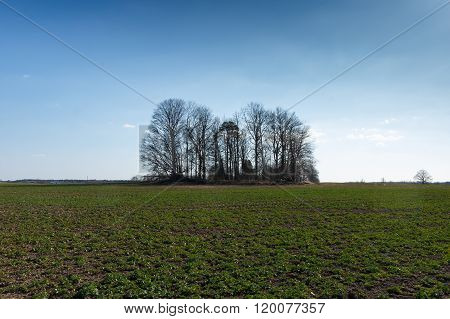 Trees near a field