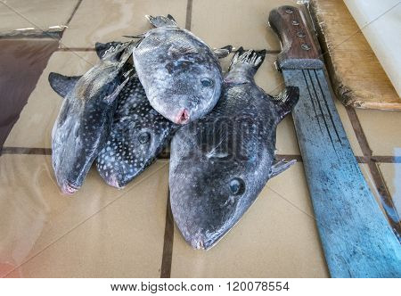 Fish In A Fish Market