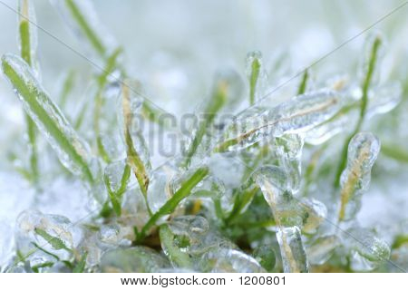 Frozen Blades Of Grass