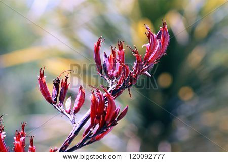 New Zealand Flax Flower
