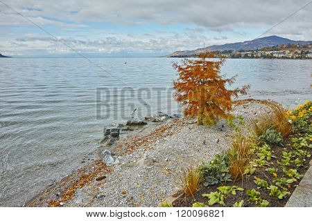 Red tree on Lake Geneva in Montreux, Switzerland