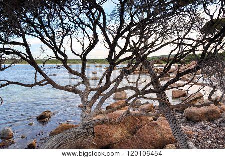 Coastal Branches: Bunker Bay, Western Australia
