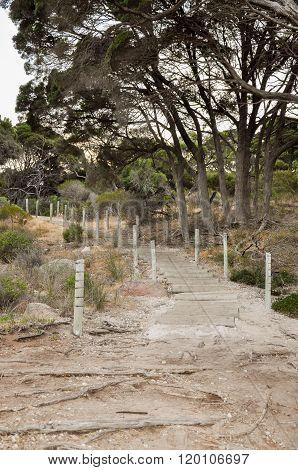 Path at Shelley Cove