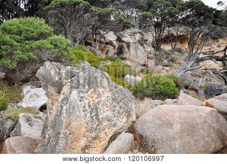 Limestone Cliffs: Bunker Bay, Western Australia