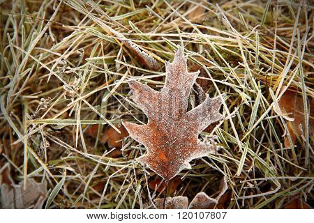 Frozen leaf on grass, close up. Natural background