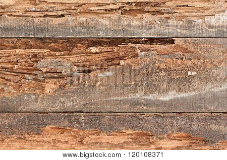 Traces Of Termites Eat Old Wood.