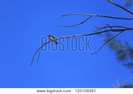 Bird Standing On Branch Of Dead Tree