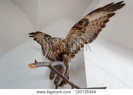 Stuffed Hawk Beautiful Bird On A Branch Indoors