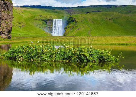 In the middle of the pond picturesque flower beds. Impressive waterfall Skogafoss reflected in a small pond. Fantastic reflection