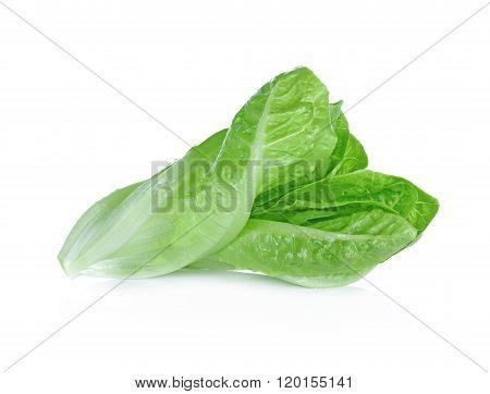 Fresh cos on white background vegetable  fiber