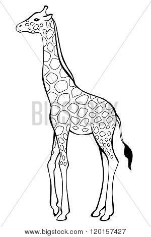 Giraffe black white isolated illustration vector