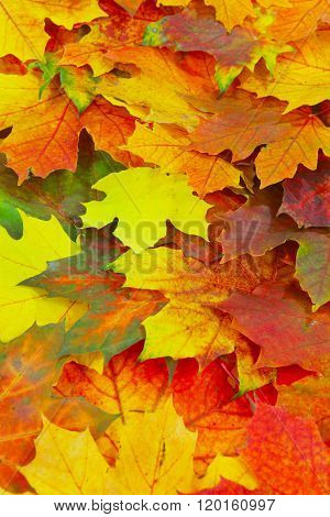 colorful luminous autumn leaves filling the picture as a background