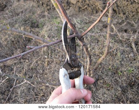 Pruning Shears Trees