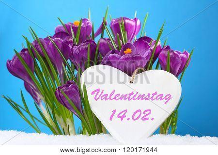 Crocuses Remember Valentine's Day