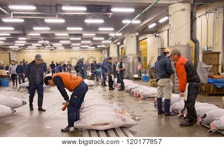Tuna Auction At Tsukiji Fish Market Tokyo Japan