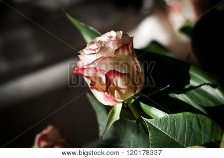 Roses And Bouquets For The Bride