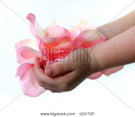 Petals In Hands 1 F