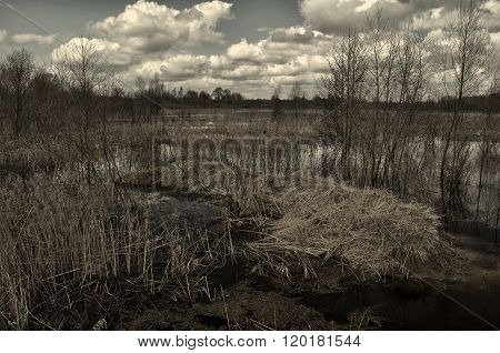 Mysterious  Landscape In Dark Tones - Forest Trees Along The Small Overgrown River