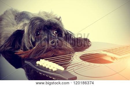 Doggy With A Guitar.