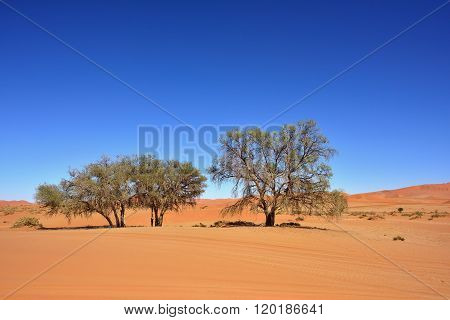 Namib Naukluft National Park, Namib Desert