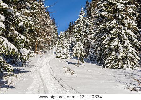 Trail Through The Woods Winter Season.