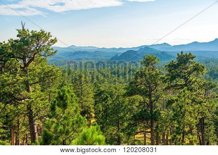 Forested Landscape In South Dakota