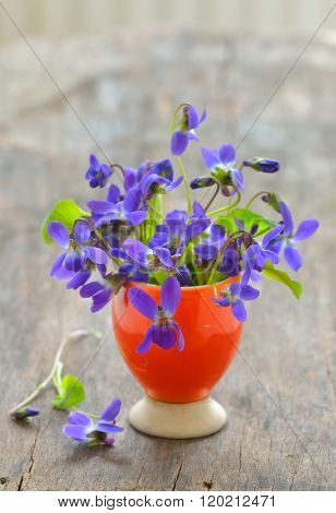 violets flowers (Viola odorata) on wood background