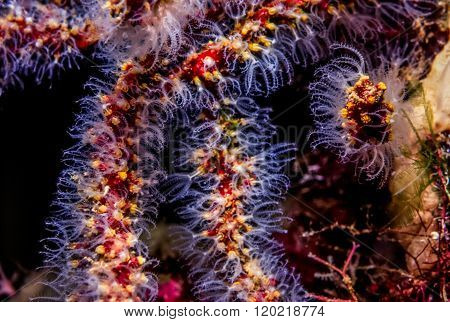 Extended Coral polyps at night Filozoa are a monophyletic grouping within the Opisthokonta.