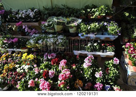 Different potted colorful flowers.