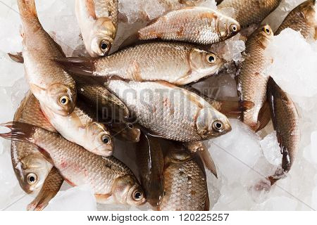 Crucian Carp Fish On Ice As Background