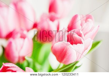 Tulip Best Flowers