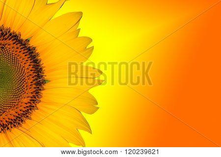 Sunflower Background for presentation/Sunflower Background/Sunflower