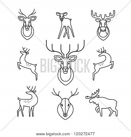 Jumping and standing deers, moose, antlers