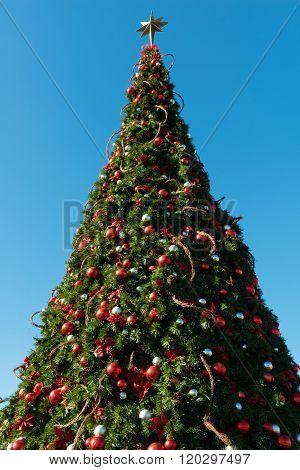Christmas Tree And Sky